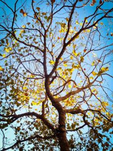 stigma tree